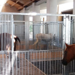 Oq-horses-077