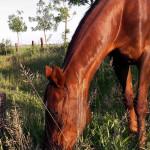 Oq-horses-15